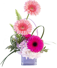 LOVE GERBERA BLUSH