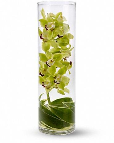 Zensational Orchids in Glass